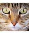 """""""È il Gatto"""""""
