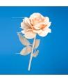 """""""Liquid Rose"""""""