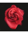 """Red Rose in Dark"""
