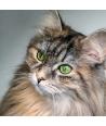 Il Gatto Curioso