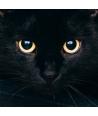 Occhi Gatto Nero