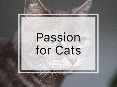 Jewels with Cats Images